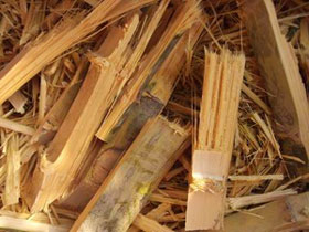 bamboo_waste