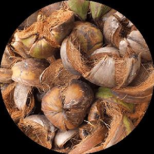 coconut-shell
